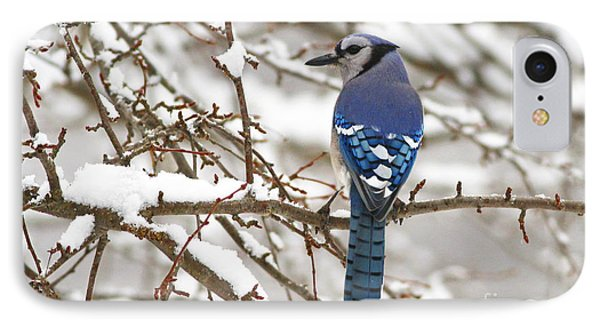 White Snows Blue Jay IPhone Case
