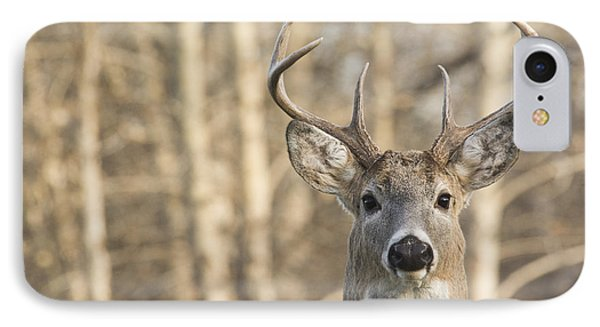 White-tailed Buck IPhone Case