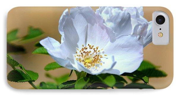 White Tea Rose IPhone Case