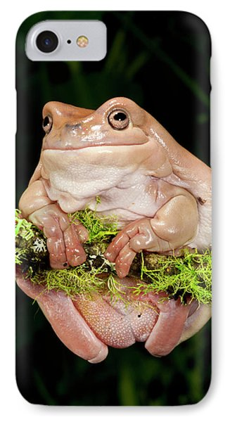 White's Treefrog, Litoria Caerulea IPhone Case