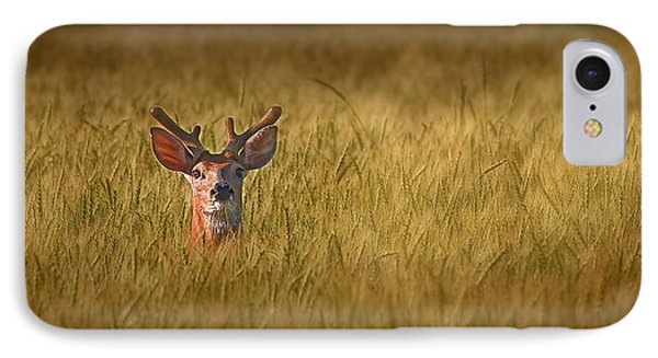 Whitetail Deer In Wheat Field IPhone Case