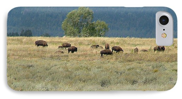 Wild Buffalo In The Grand Tetons IPhone Case
