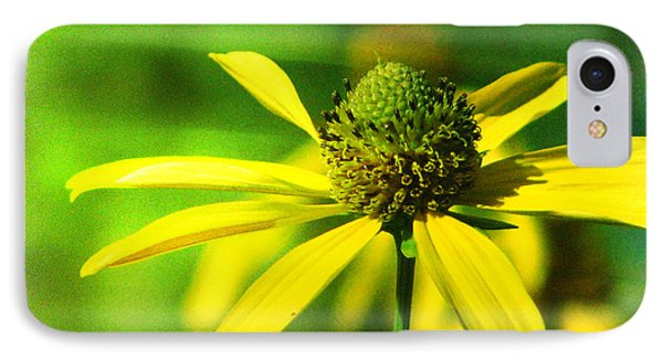Wild Coneflower Secret Meadow Sandia Mountains Albuquerque New Mexico IPhone Case