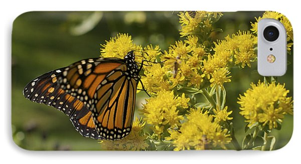Wings - Monarch On Goldenrod IPhone Case