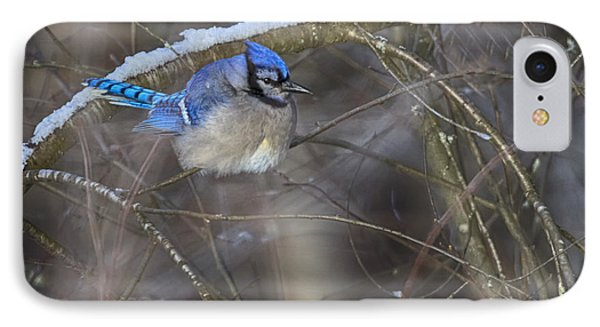 Winter Blue Jay IPhone Case