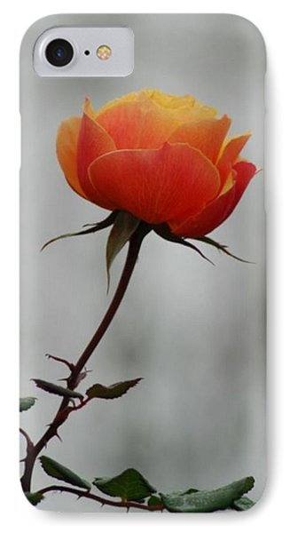 Winter Rose IPhone Case