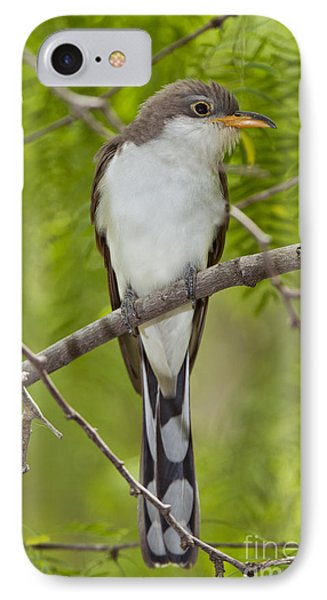 Yellow-billed Cuckoo IPhone Case