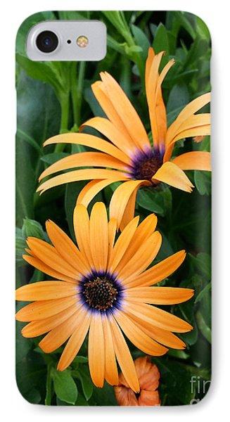 Yellow Cape Daisy IPhone Case