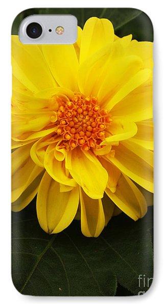 Yellow Dahlias IPhone Case