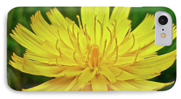 iPhone 8 Case - Yellow Hawkweed - Hieracium Caespitosum  by Mother Nature
