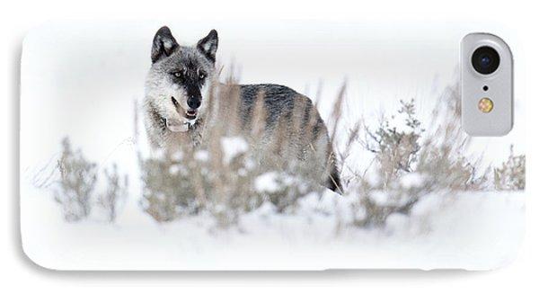 Yellowstone Wolf IPhone Case