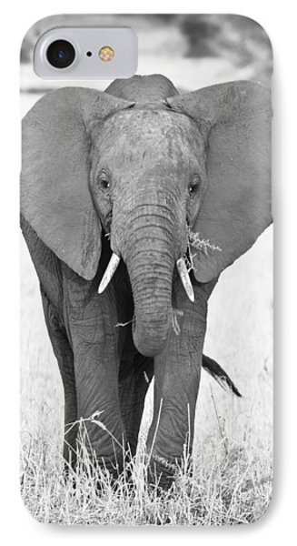 Young Bull Elephant IPhone Case
