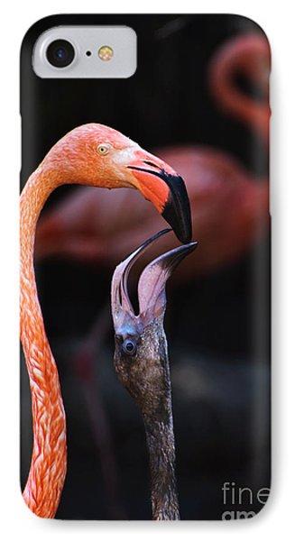 Young Flamingo Feeding IPhone Case