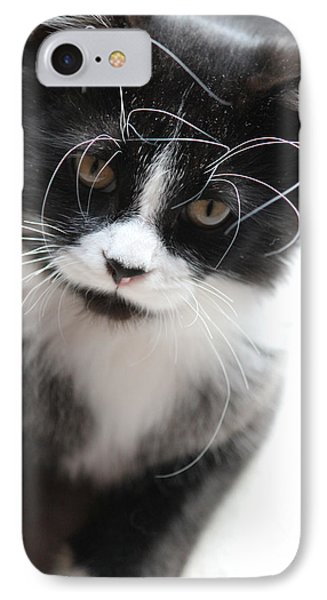 Cat In Chaotic Thought IPhone Case
