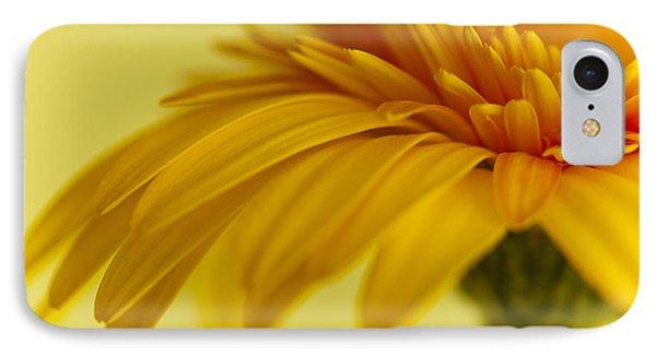Gerbera Flower IPhone Case