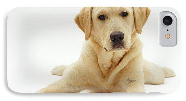 Labrador X Golden Retriever Puppy IPhone Case