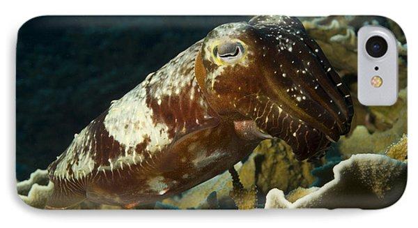 Broadclub Cuttlefish, Papua New Guinea IPhone Case