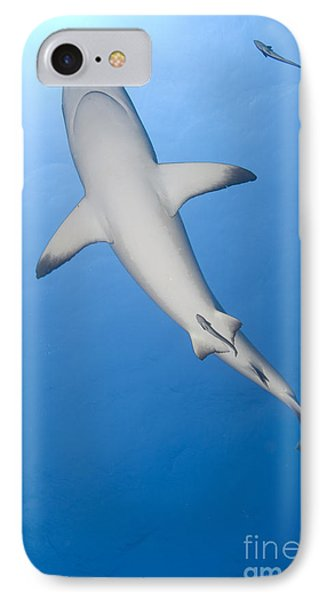 Gray Reef Shark With Remora, Papua New IPhone Case