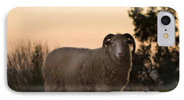 Sheep iPhone 8 Case - The Lamb by Angel Ciesniarska