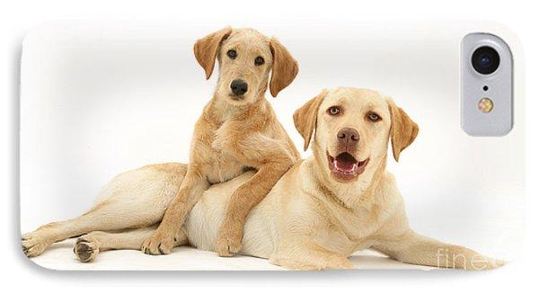 Labradoodle And Labrador Retriever IPhone Case