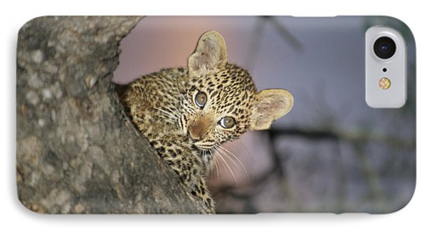 Republic Of South Africa iPhone 8 Case - A Baby Leopard Peeks by Kim Wolhuter