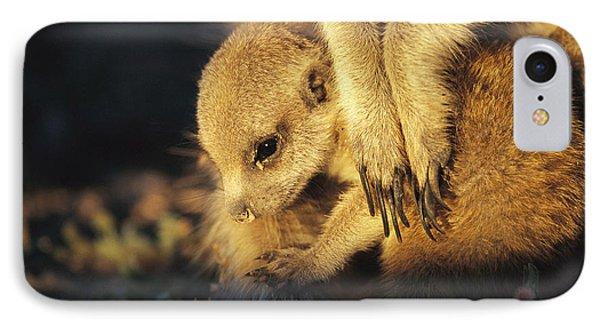 Republic Of South Africa iPhone 8 Case - A Baby Meerkat Snuggles by Mattias Klum