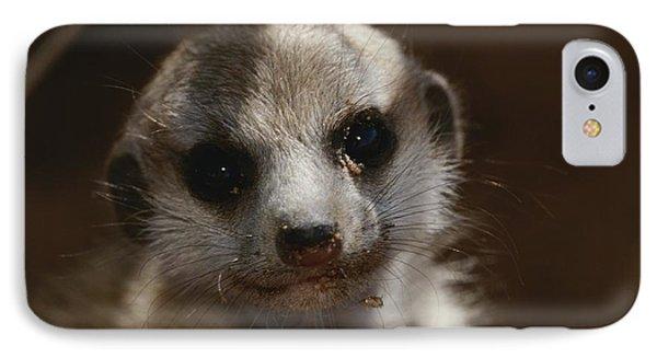 Republic Of South Africa iPhone 8 Case - A Close View Of A Meerkat Suricata by Mattias Klum