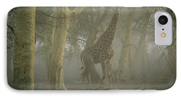 Republic Of South Africa iPhone 8 Case - A Giraffe Walking In A Misty Forest by Chris Johns