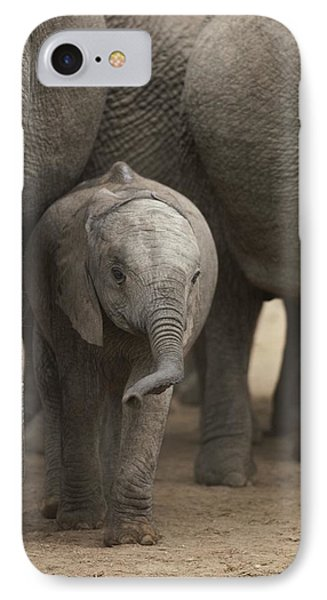 Republic Of South Africa iPhone 8 Case - A Juvenile Elephant Standing Amongst by Kenneth Garrett