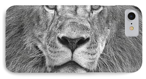 A Lion's Stare IPhone Case