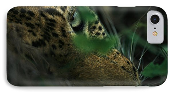 Republic Of South Africa iPhone 8 Case - A Male Leopard Dozes by Kim Wolhuter