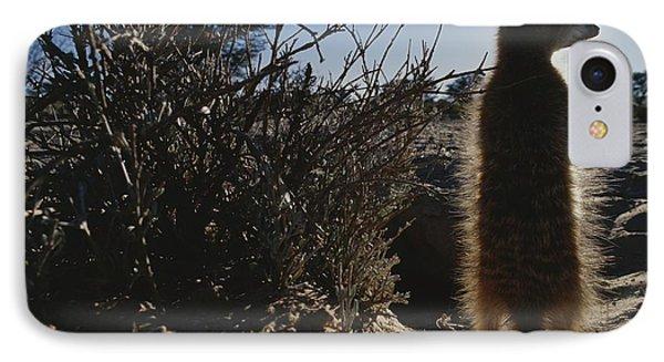 Republic Of South Africa iPhone 8 Case - A Meerkat Suricata Suricatta Stands by Mattias Klum