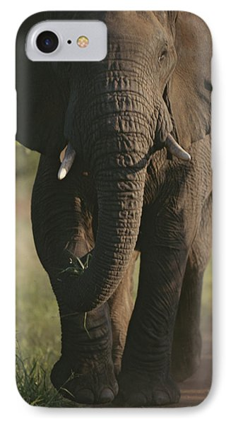 Republic Of South Africa iPhone 8 Case - A Portrait Of An African Elephant by Tim Laman