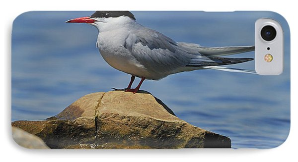 Adult Common Tern IPhone Case