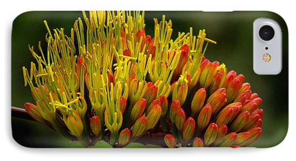 Agave Bloom IPhone Case