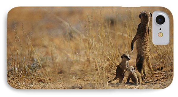 Republic Of South Africa iPhone 8 Case - An Adult Meerkat Stands Guard Over Two by Mattias Klum