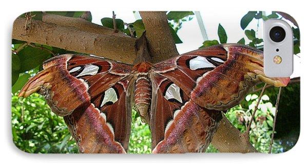 Atlas Moth IPhone Case