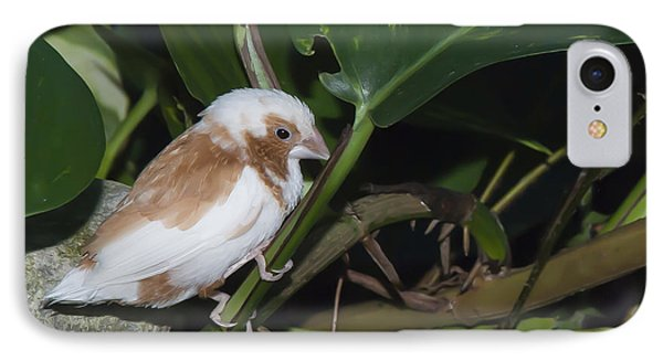 Baby Finch IPhone Case