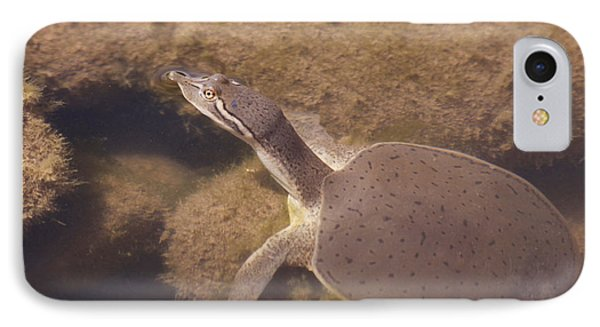 Baby Turtle IPhone Case