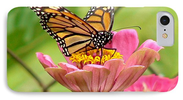 Back Yard Butterfly IPhone Case