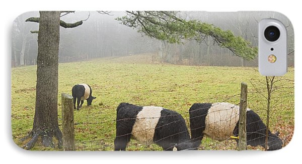Belted Galloway Cows On Farm In Rockport Maine Photograph IPhone Case