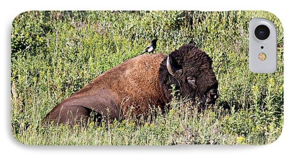 Bison And Bird IPhone Case