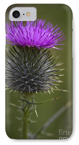 Blooming Thistle IPhone Case