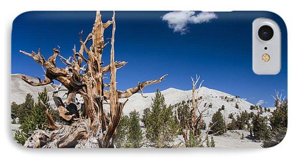 Bristlecone Pine - Pinus Longaeva IPhone Case