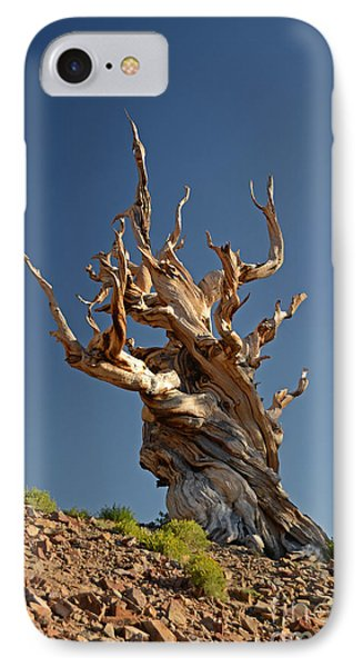 Bristlecone Pine IPhone Case