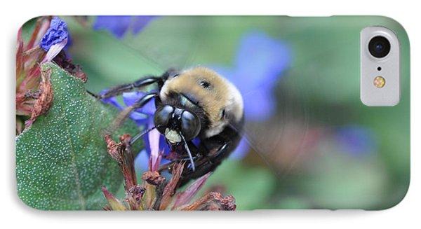 Bumblebee In Plumbago Larpentae IPhone Case