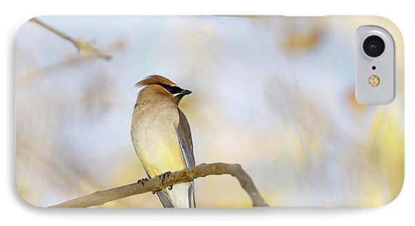 Cedar Waxwing On Yellow And Blue IPhone Case