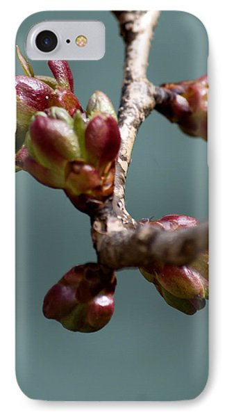 Cherry Blossom Number 4 IPhone Case