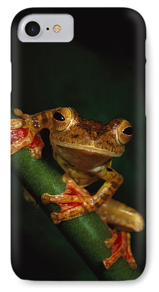 Close View Of A Harlequin Tree Frog IPhone Case