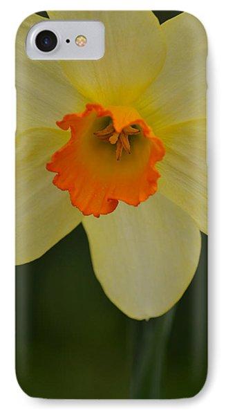 Daffodilicious IPhone Case
